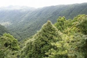 今年广东将营造林1074万亩