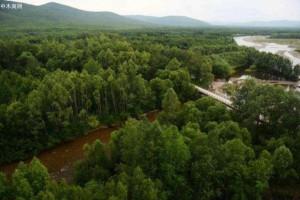 """加拿大卑诗省为""""振兴森林产业""""预留2019年财政资金"""