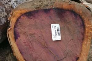 南美紫心木原木林场直供出售