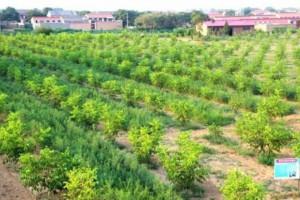 栽苗种树,首要的是水,苗木和土壤的供水与保水,是成活的关键!