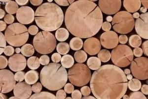 白蜡木和黑胡桃木的区别?如何辨别和保养白蜡木家具和黑胡桃木家具
