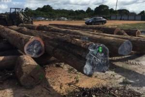 今年永嘉森林采伐总量为120490立方米!