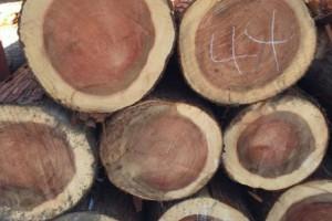 日本木材出口创41年来新高,中国仍是最大买主