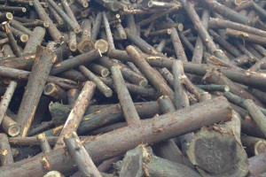 各种规格的水杉原木林场直销