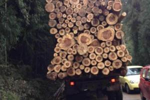 各种规格的水杉原木厂家批发