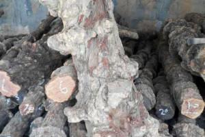 红椆木原木价格