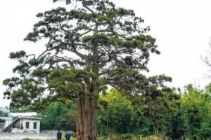 """珍贵树种""""钱""""景无限,发展请认准这份树种名录!"""