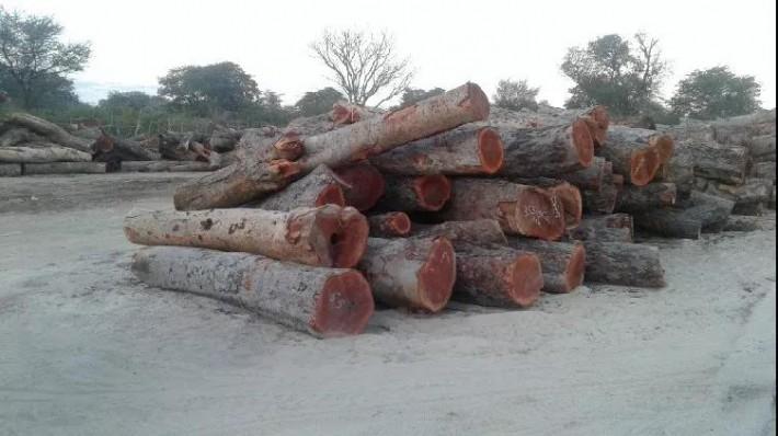 出口木材的人都应该关注自己的生意