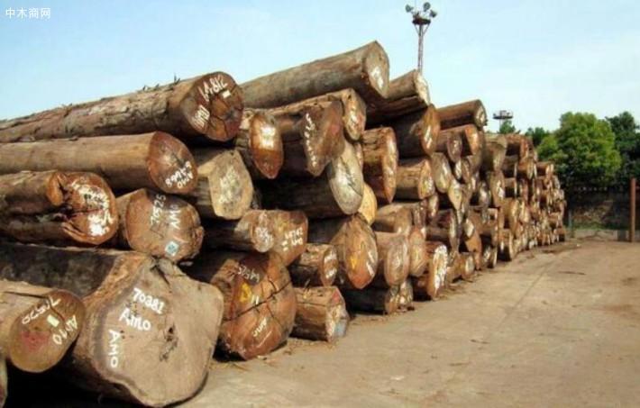 原来日本才是木材出口大国,将近一半木材出口中国,这是怎么回事