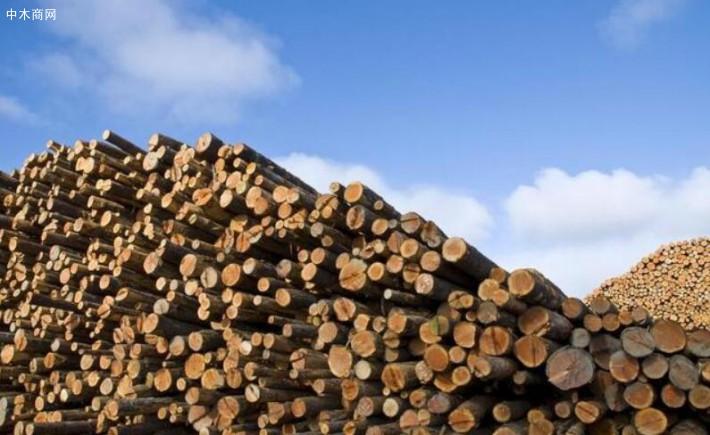 近些年来我国对于木材的需求量是相当大的