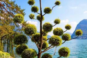 植树节到了 一起遍赏各国最美树景