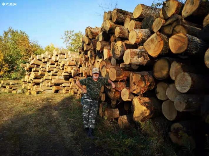 俄罗斯橡木原木林场直供