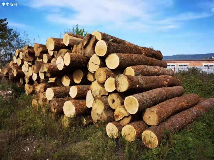 橡木优质树种比较少