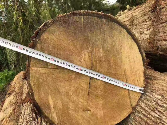 专业出口俄罗斯橡木原木及板材