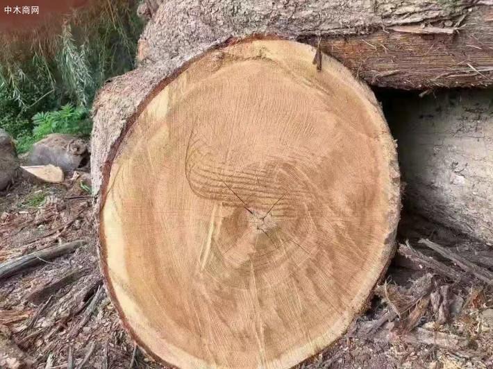 加工好的木材按照欧洲标准进行防腐处理