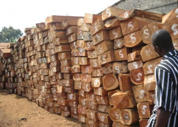 男子因做非洲木材生意违约被限制出境