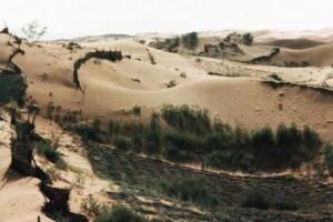 加大三北工程退化林分修复改造力度