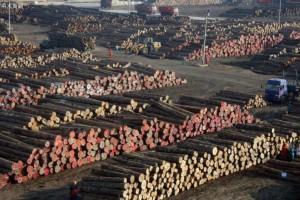 """广西将取代临沂,成为新的""""木业之都""""?"""