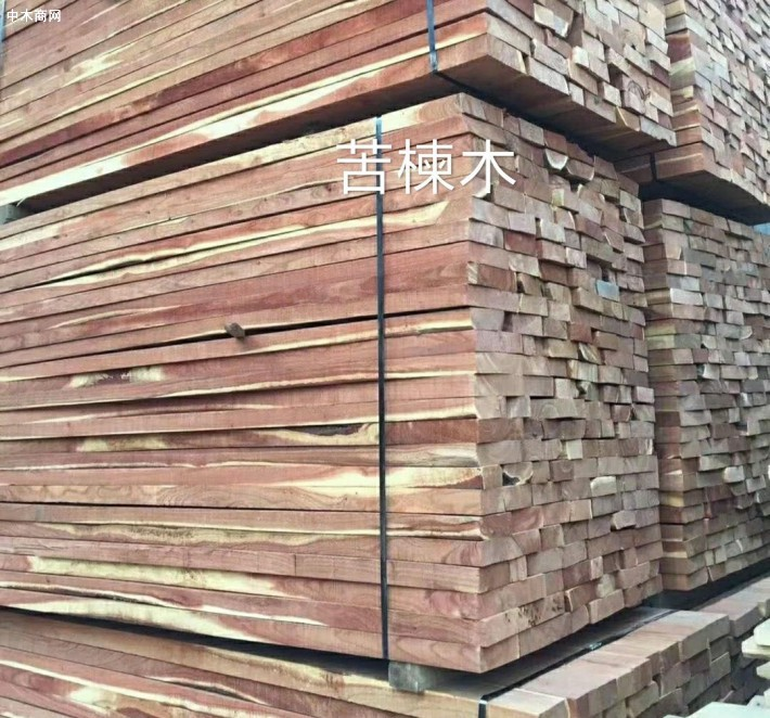 苦楝木烘干板材,物美价廉