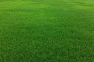 特价供马尼拉草坪,天堂草坪,百慕大草皮