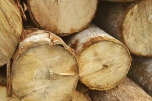 杂木原木批发