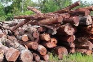 酸枝木原材料