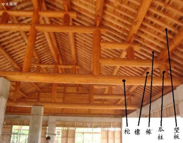柳杉的外用:适量,捣敷或煎水洗