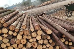 柳杉原木 柳杉檩条 柳杉领子高清图片