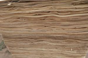 杨木木皮高清图片