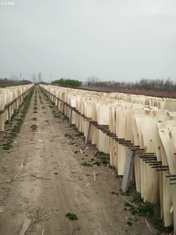 新鲜出炉的杨木三拼单板大量出售