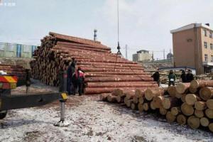 我国从俄罗斯进口木材种类主要有那些?