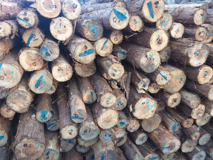 长年供应各国原木,上海崃沣公司