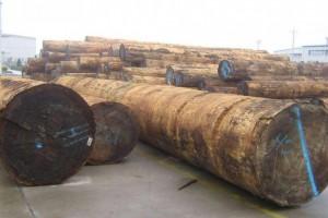 南宁海关查获155.1吨濒危树种木材 货值超过150万元