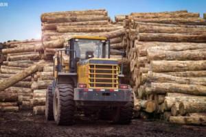 广德县严厉查处非法运输木材案件