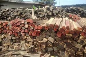 南京市高淳区开展林业行业安全生产大检查