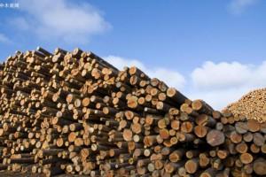 福建首个木材临港产业园开业 13家企业确定入驻