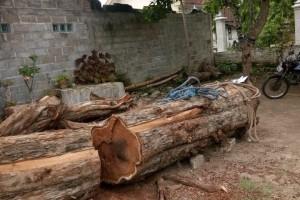 正宗大径印尼黑酸枝,印尼阔叶黄檀原木加工视频