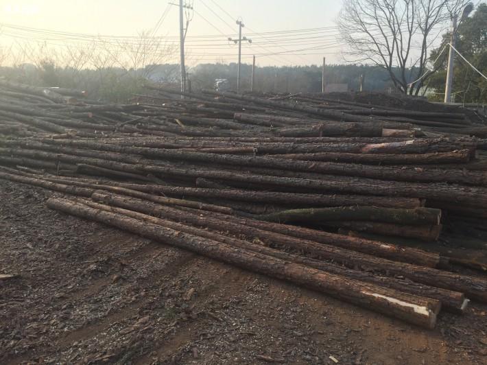 供应落叶松油松松木桩