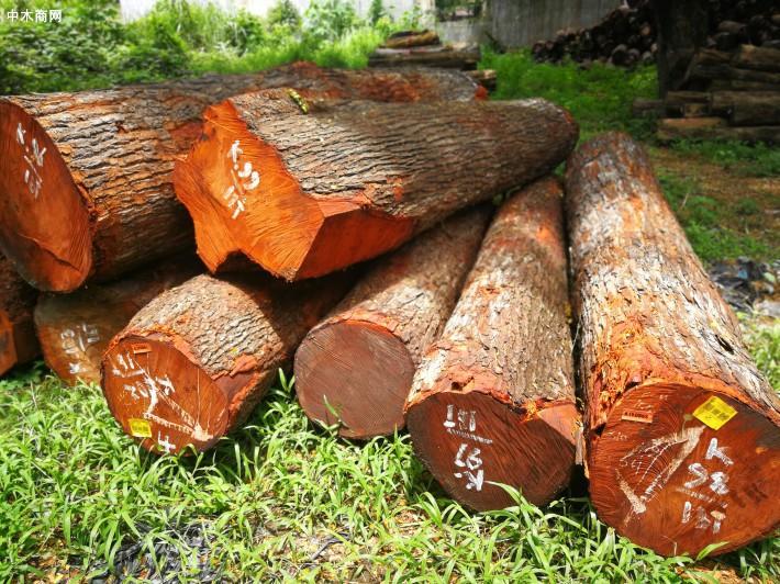 正宗的缅甸柚木都是天然柚木,印尼是最大的人工柚木种植地
