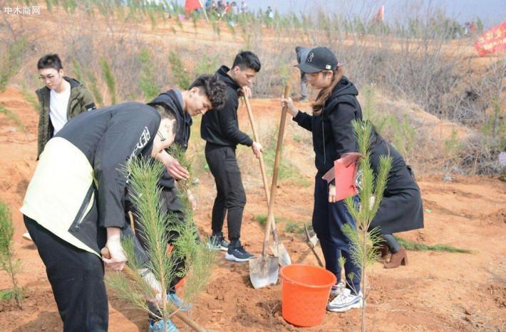 赞!福人莆田木业党支部组织植树活动
