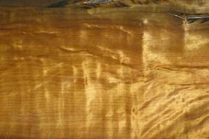 从金丝楠的历史悠久程度见证金丝楠之名木说