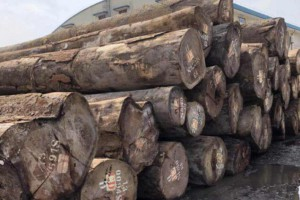 非洲发展银行在利比里亚启动120万美元木材加工项目