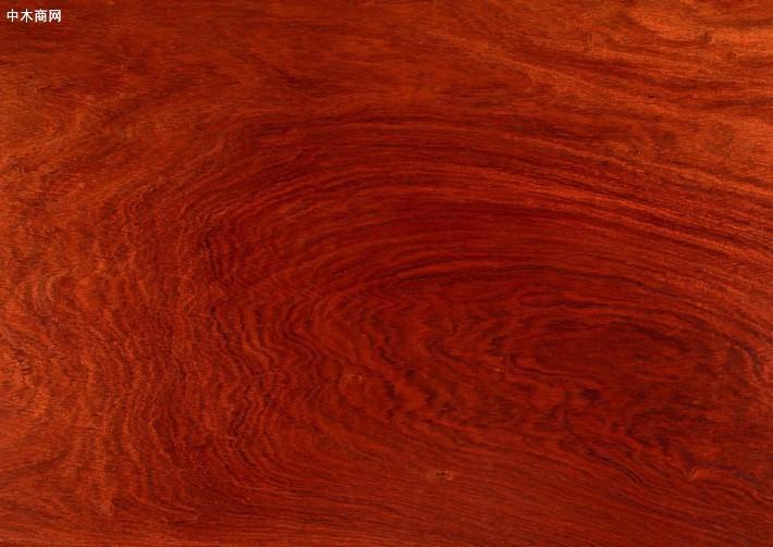 韶关木材检测红木贵重树种检测中心