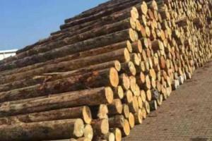 辐射松原木总库存量正处小幅上升态势