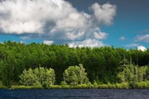 内蒙古森林面积达到3.92亿亩