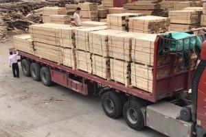 俄罗斯木材或将遭遇新的发展契机