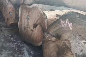 刚果花梨木原木