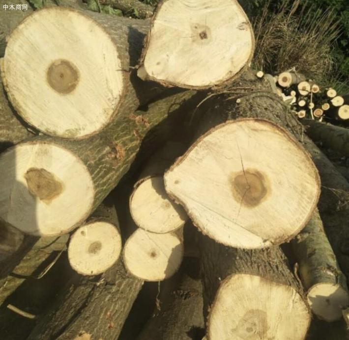 长期大量收购杨木,松木,规格1米,2米,3米。