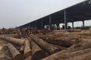 东莞木方厂销售家、东莞木方加工、东莞木方规格定制