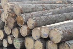 白俄罗斯将增加对中国的木材供应
